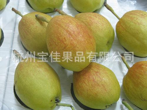 供应正宗新疆库尔勒香梨 特甜 新鲜有机水果 贡梨(图)