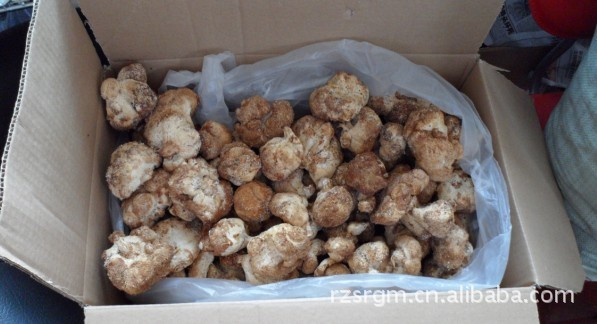 东北特产 吉林融泽 野生猴头菇 散装 营养价值高