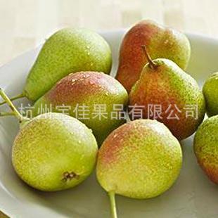批发水果 供应库尔勒香梨 正宗新疆香梨 (图)