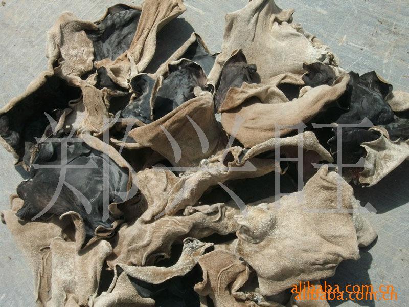 山东省鱼台县木耳种植基地 长期供应批发 优质干木耳 量大从优