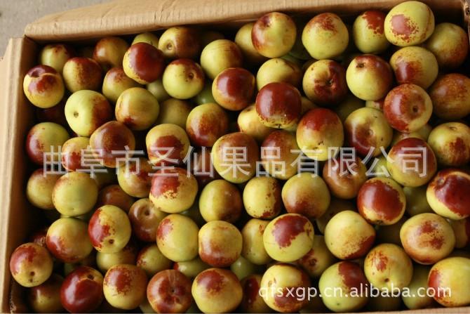 曲阜圣仙果品有限公司常年供应优质冬枣
