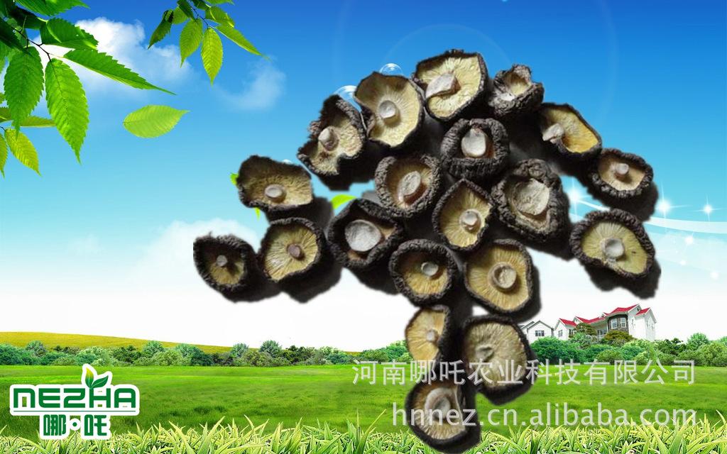 AB级出口干香菇 西峡香菇 直径3-4厘米