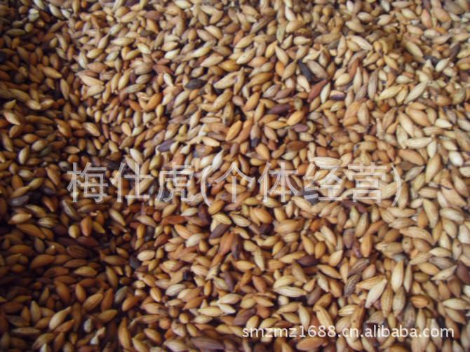 桂花种子批发/八月桂种子、金桂种子批发价格