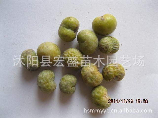 批发各种苗木种子、棕榈种子、绿化苗木、