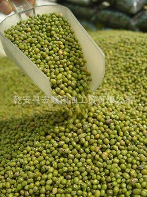 绿豆 经过比重 磁选 去石 色选 优质东北绿豆大量供应
