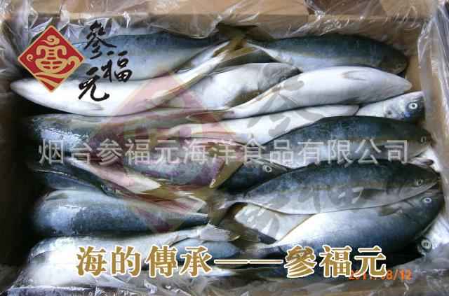 大量批发进口鰤鱼/鲥鱼 进口海鲜水产,进口鱼 鱼类