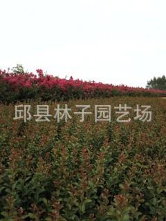 QQ图片20130718120516