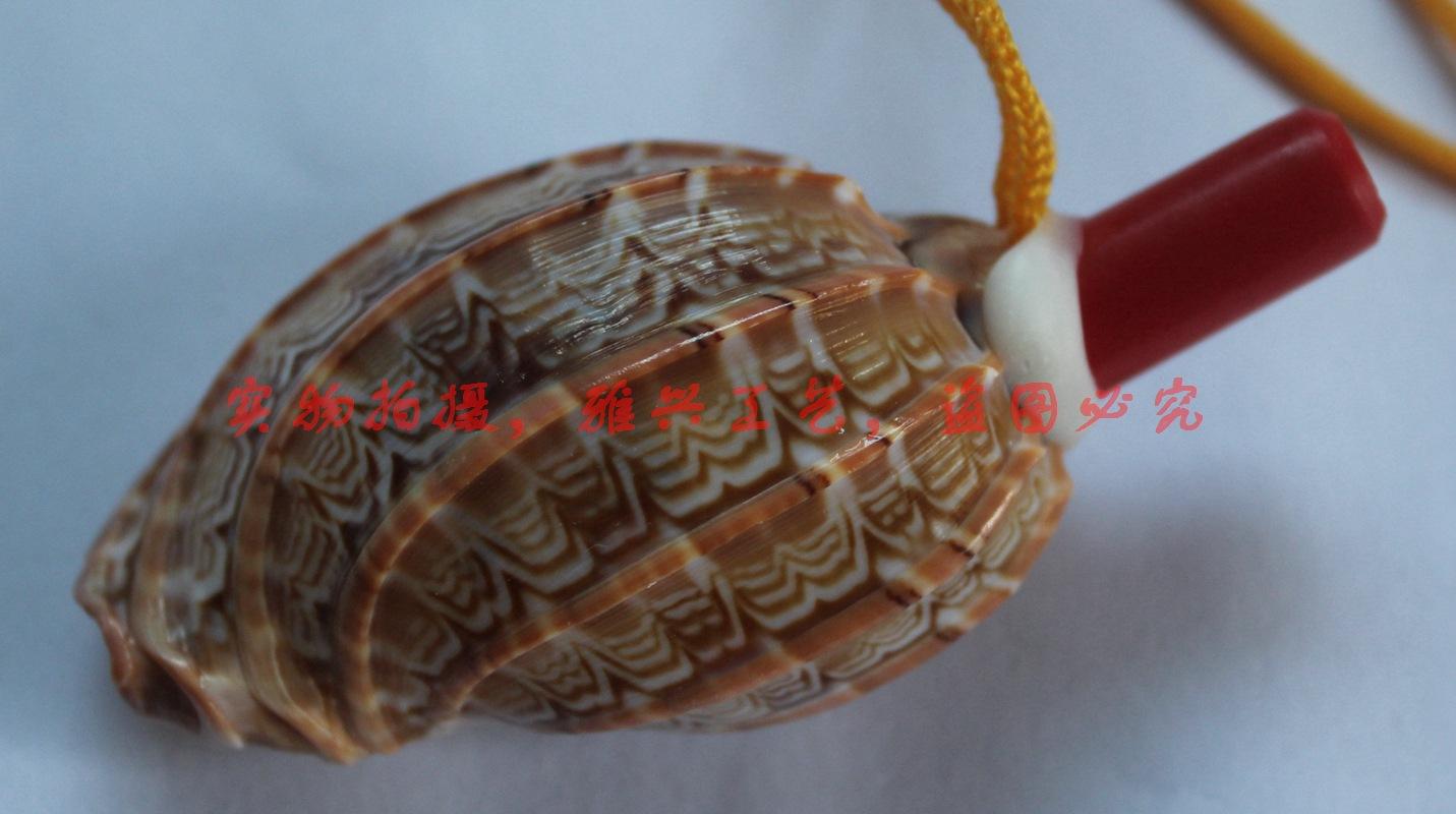 天然海螺批发 杨桃海螺贝壳工艺品批发 大海螺壳批发 杨桃形海螺 -价