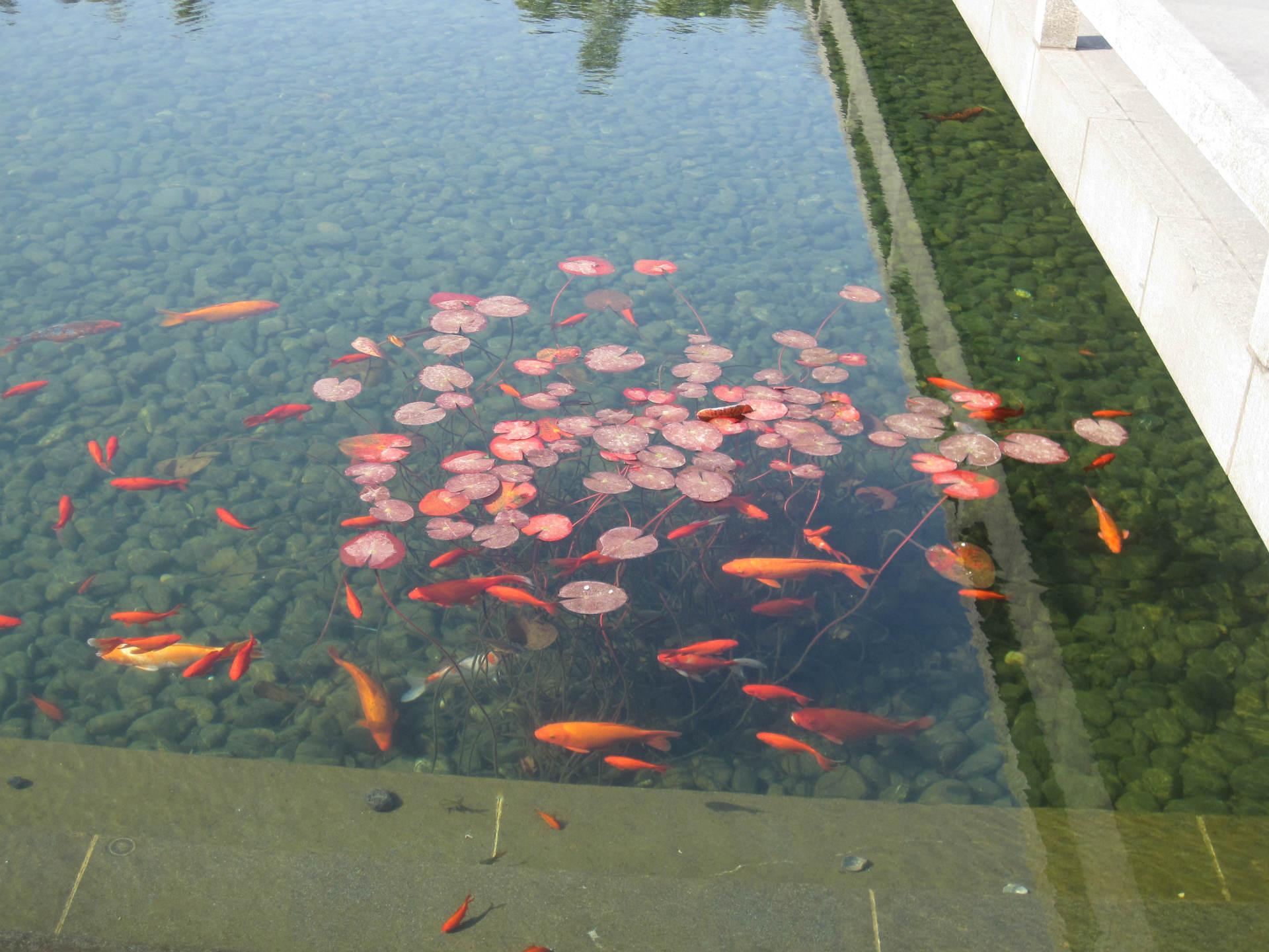 假山 水景 锦鲤池 喷泉设计安装 假山 水图片
