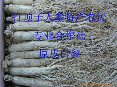 长白山人参--优质原皮白参